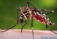 Dấu hiệu nhận biết nhiễm virus Zika