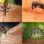 Triệu chứng sốt xuất huyết Dengue ở người lớn