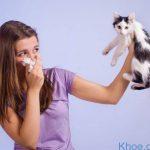 Dị ứng lông mèo và nguy cơ sức khỏe