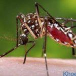 Dấu hiệu nhận biết nhiễm virus Zika và cách phòng ngừa bệnh