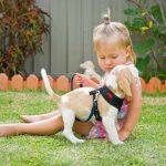 Tác hại khi để trẻ tiếp xúc với chó mèo